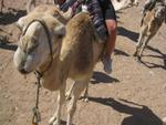 Sharm el Sheikh 181