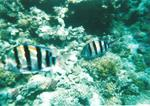 Sharm 24