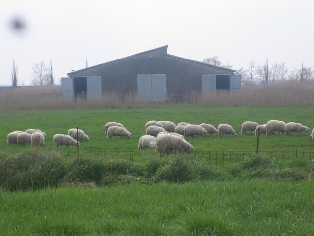 Ostellato 2009 (9)
